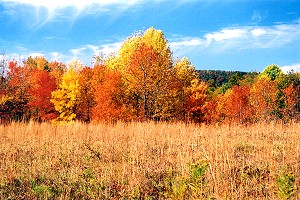 Quebec Run Wild Area�s Autumn Colored Forest Edge